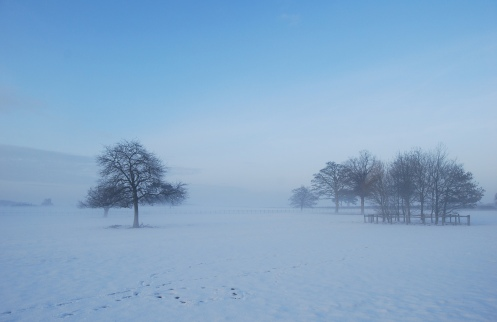 Misty snow trees