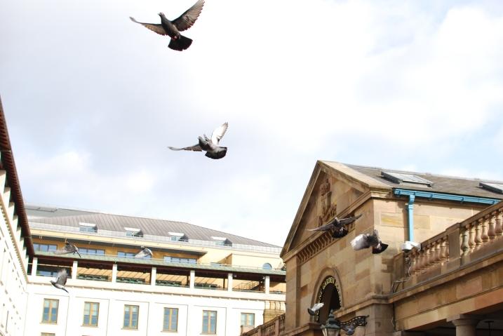 Urban Doves