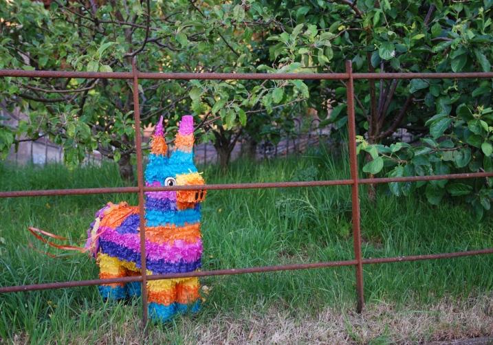 Somerset Donkey