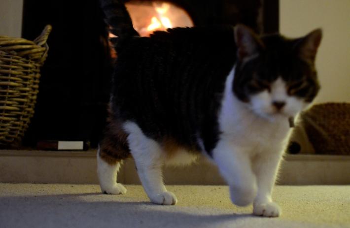 Bob the lady cat