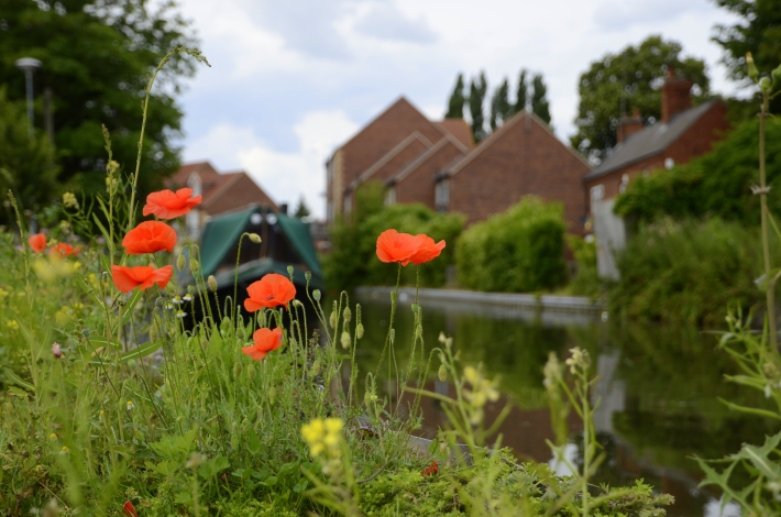 Poppies next to canal